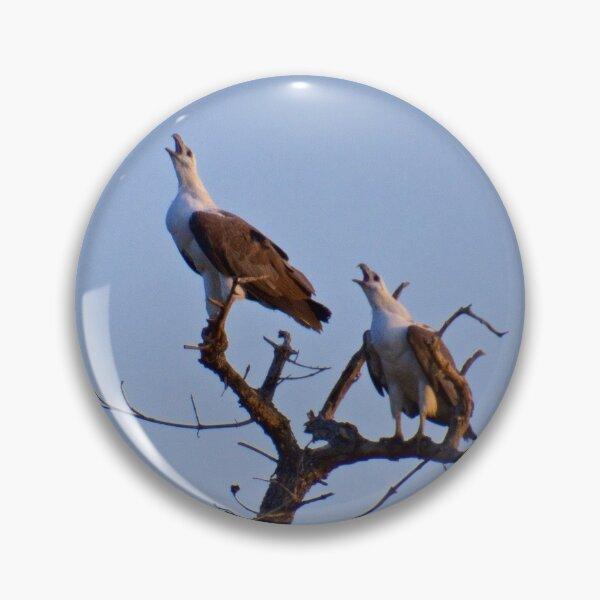 NT ~ RAPTOR ~ White-bellied Sea-Eagle by David Irwin 15012021 Pin