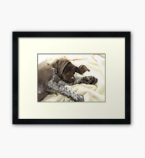 Glossy Grizzly German Shorthaired Pointer Framed Print