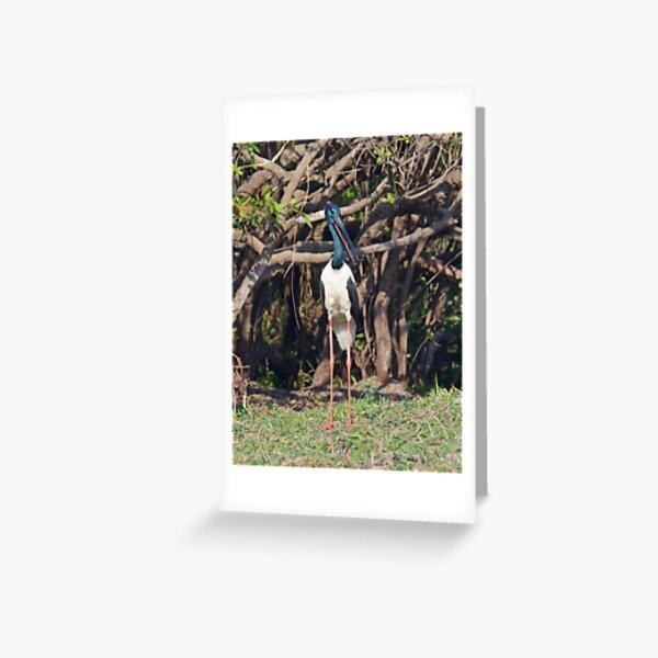 NT ~ STORK ~ Black-necked Stork ~ Jabiru gJVx7uZG by David Irwin 15012021 Greeting Card
