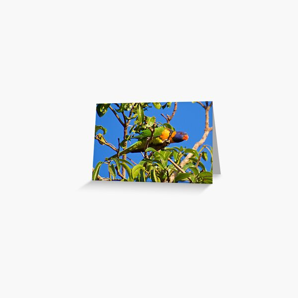 NT ~ PARROT ~ Red-collared Lorikeet BZ9KN5jt by David Irwin 15012021 Greeting Card