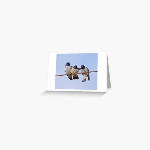 NT ~ SWALLOW ~ White-breasted Woodswallow YNW2KSGZ by David Irwin 15012021 Greeting Card