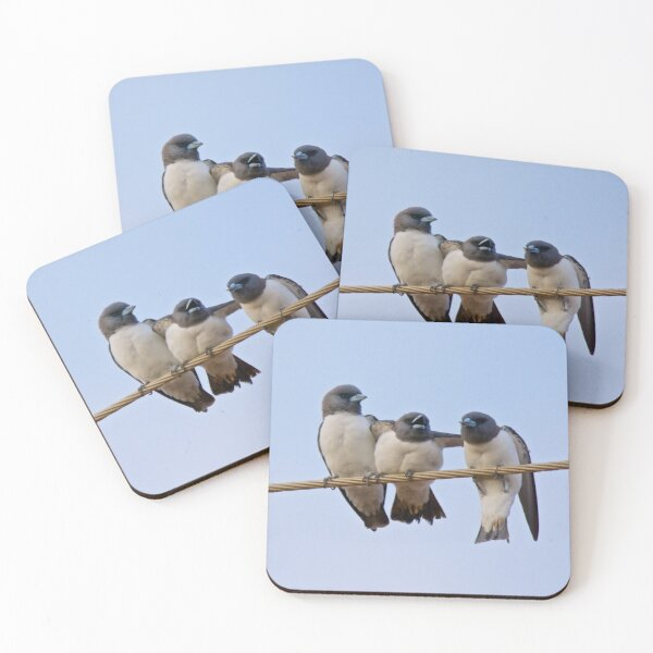 NT ~ SWALLOW ~ White-breasted Woodswallow by David Irwin 15012021 Coasters (Set of 4)