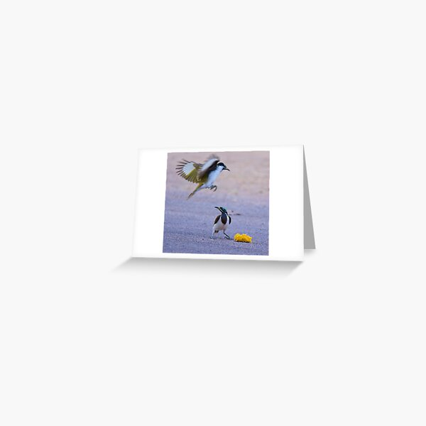 NT ~ HONEYEATER ~ Blue-faced Honeyeater Re2EVCMh by David Irwin 15012021 Greeting Card