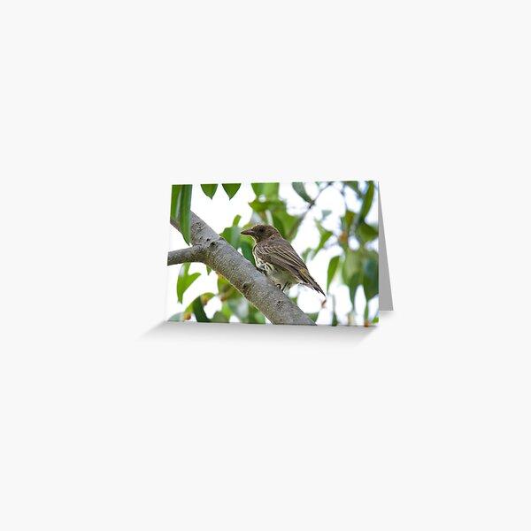 NT ~ FIGBIRD ~ Australasian Figbird nmGqHBdd Juvenile by David Irwin 15012021 Greeting Card