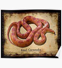 Amel Cornsnake Poster