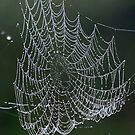 A web made of pearls ! by Anthony Goldman