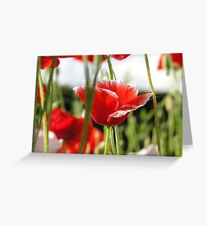 Poppies In the Grass Greeting Card