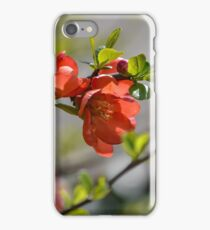 Chaenomeles Japonica  iPhone Case/Skin
