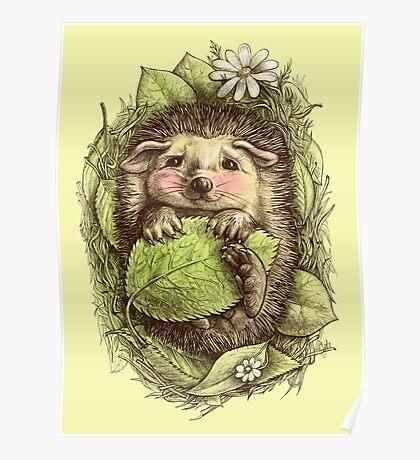 Little hedgehog colored Poster