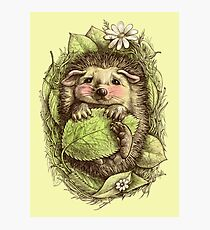Little hedgehog colored Photographic Print
