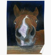 Nosy Foal Poster