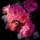 Tea Roses  by Gregory Colvin