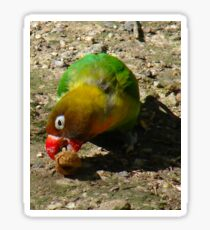 BEAUTIFUL FISCHER BIRD EATING NUT Sticker