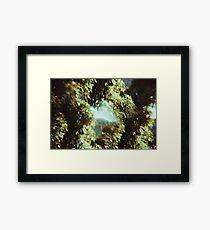 0186 Framed Print