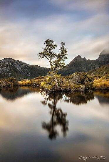 Kingly Reflections by Mieke Boynton