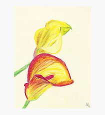 Pastel Calla Lilies Photographic Print