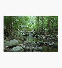Rainforest Trickle Photographic Print
