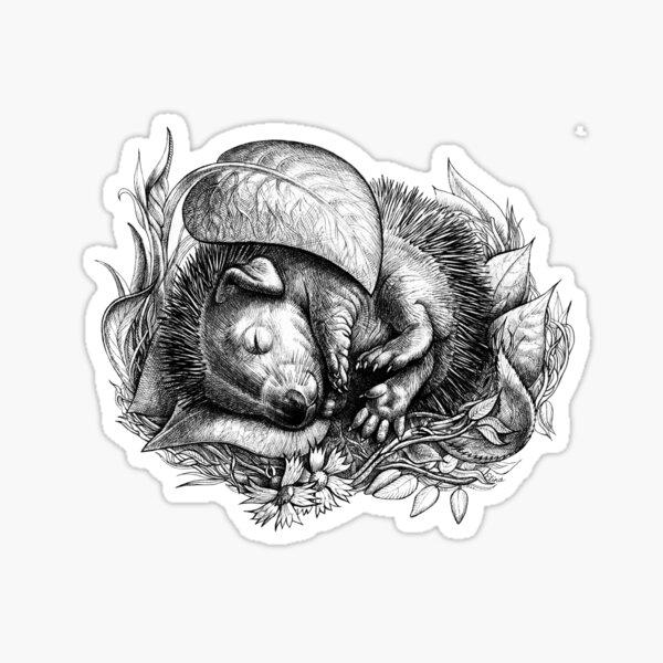 Baby hedgehog sleeping Sticker