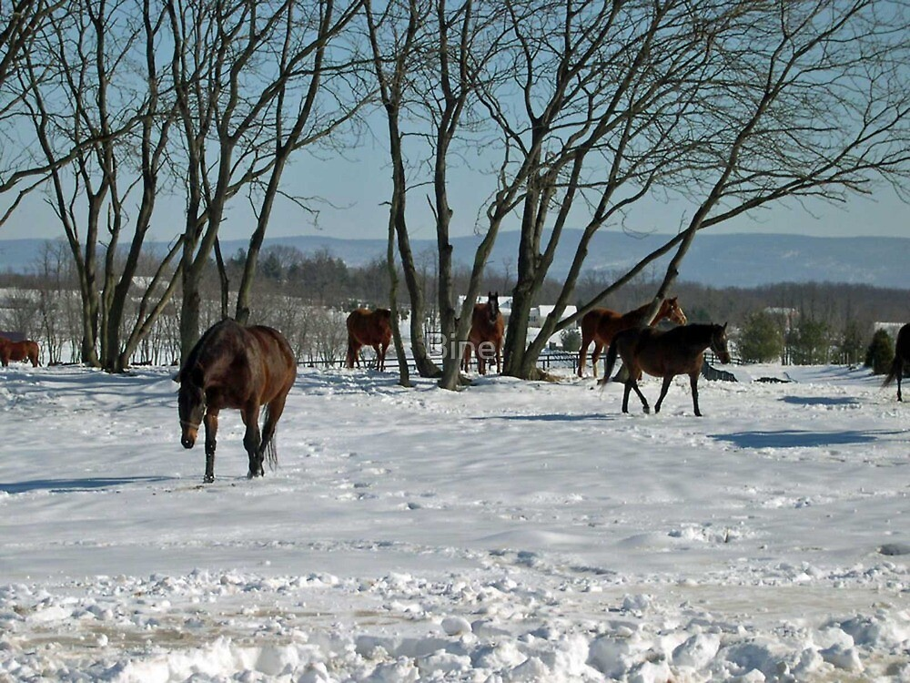 Thoroughbred Broodmares in their Winter Pasture by Bine