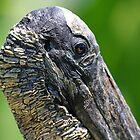 Endangered Wood Stork by jozi1