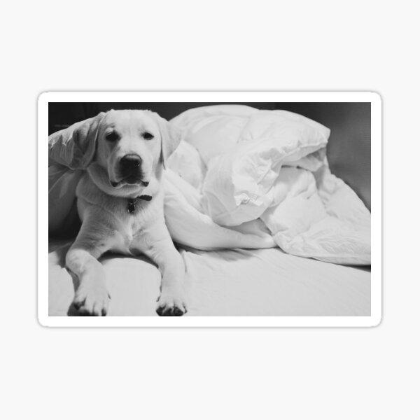 Sleepy Labrador Sticker