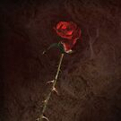 Blood Rose by robevans