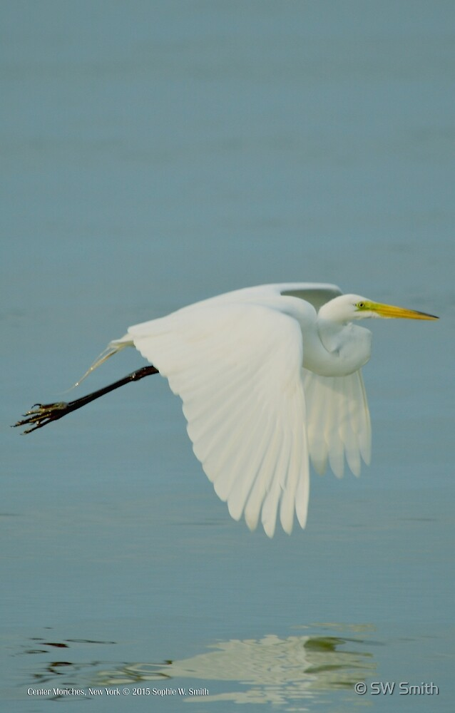 Ardea Alba - Great Egret | Center Moriches, New York by © Sophie W. Smith