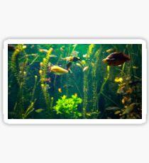Fishtank Sticker