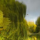 Reflected Willow by L Lee McIntyre