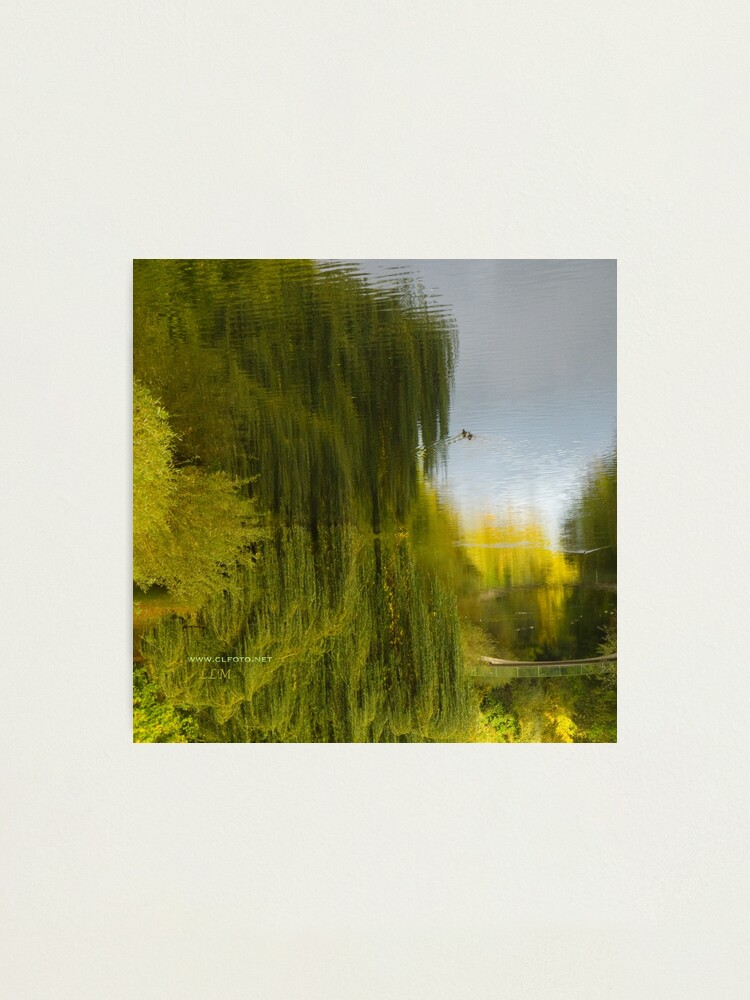 Alternate view of Reflected Willow Photographic Print