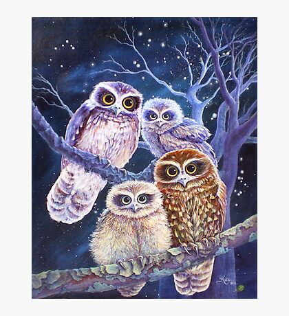 Boobook Owl Family Photographic Print