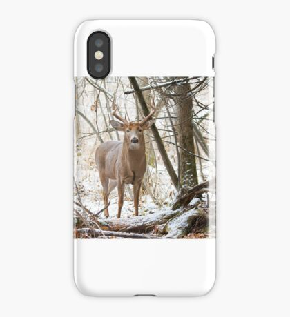 Edge of the Woods - White-tailed buck iPhone Case/Skin