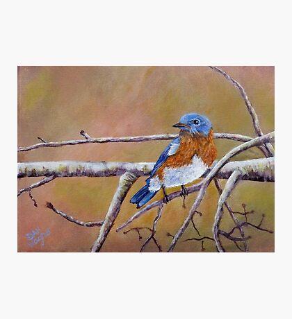 Bluey Photographic Print