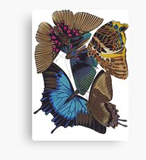 FF - Buttefly-1 Canvas Print
