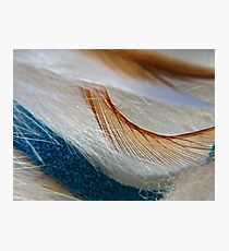 Feathers Photographic Print