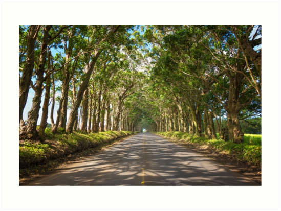 Eukalyptus-Baum-Tunnel - Kauai Hawaii von Brian Harig