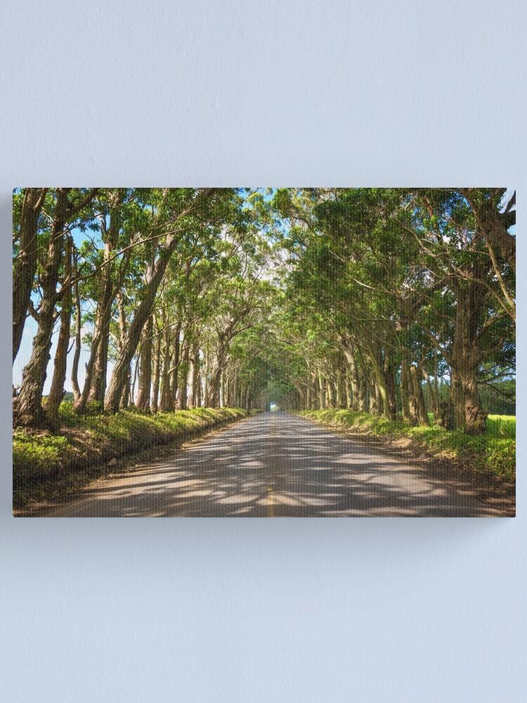 Alternate view of Eucalyptus Tree Tunnel - Kauai Hawaii Canvas Print