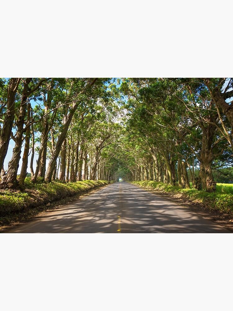 Eucalyptus Tree Tunnel - Kauai Hawaii by brianharig