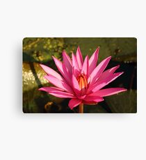 Lotus Flower in the Nature Canvas Print