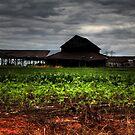 Lost Farm by Okeesworld