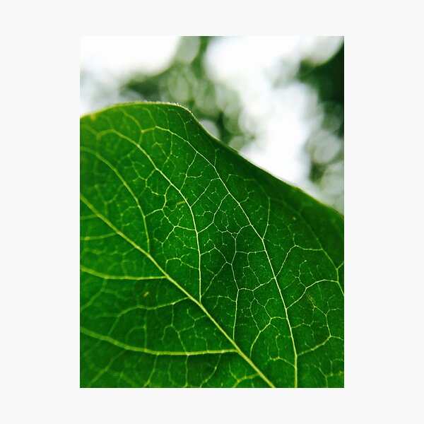 Green Veins  Photographic Print