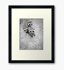 Which One Is The Cutest? Framed Print