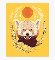 Red Panda on a Sunny Day Photographic Print