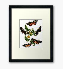 FF - Butterfly-2 Framed Print