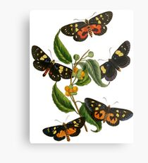 FF - Butterfly-2 Metal Print