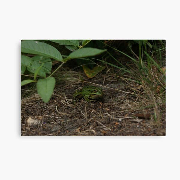 Froggy friend Canvas Print