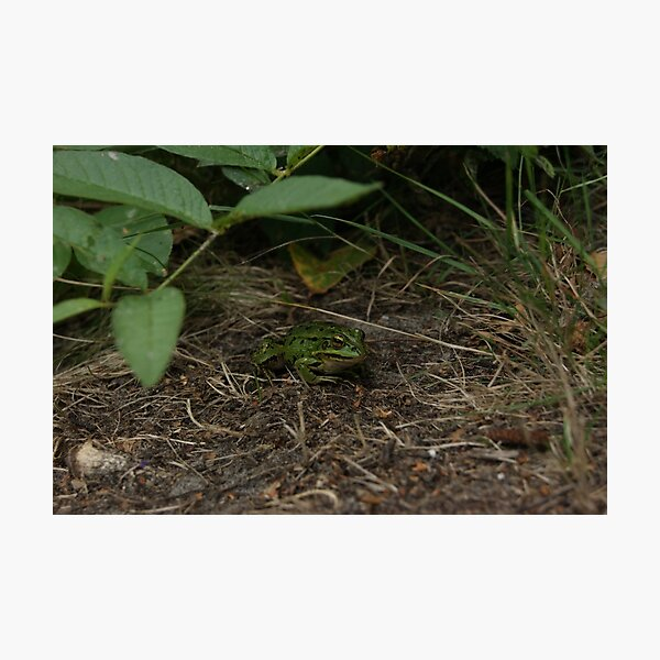 Froggy friend Photographic Print