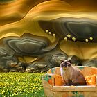 Couchpotato & the Lemon Tree by © Kira Bodensted