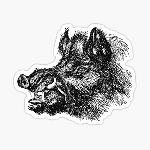Vintage Wild Boar Head Illustration Retro 1800s Black and White Image Sticker
