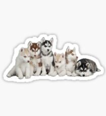 Husky Puppy Stickers Sticker